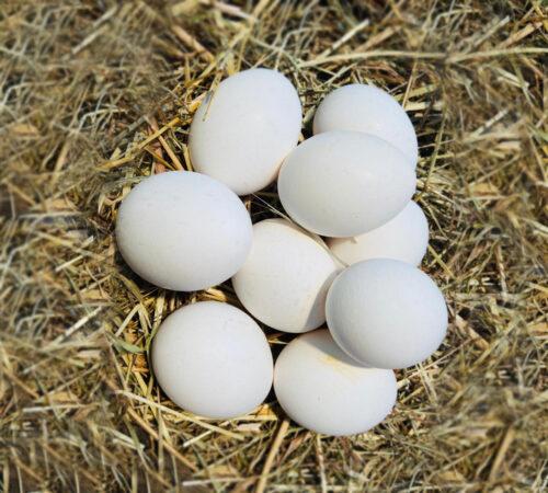 uova-bianche